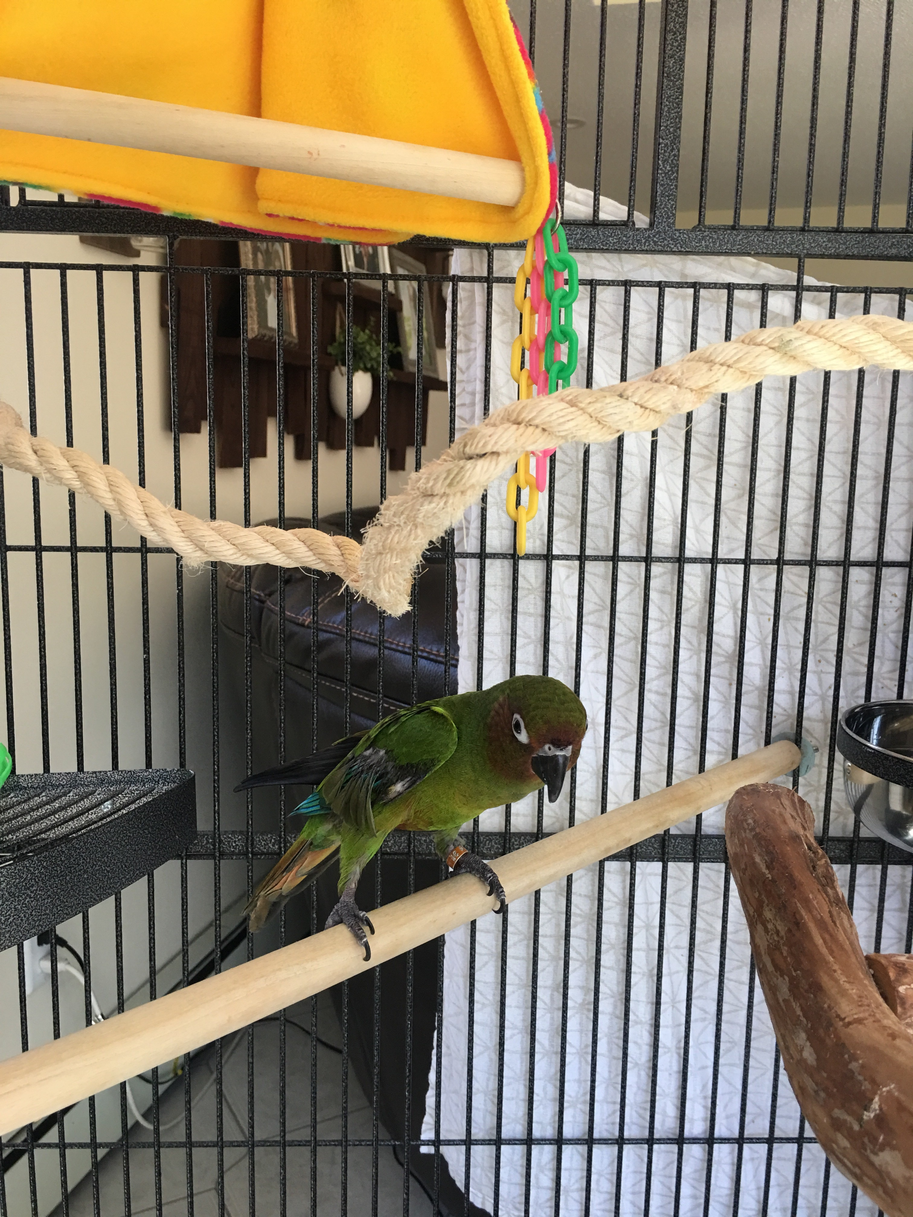 Specialized Care for Avian & Exotic Pets - Veterinarian in