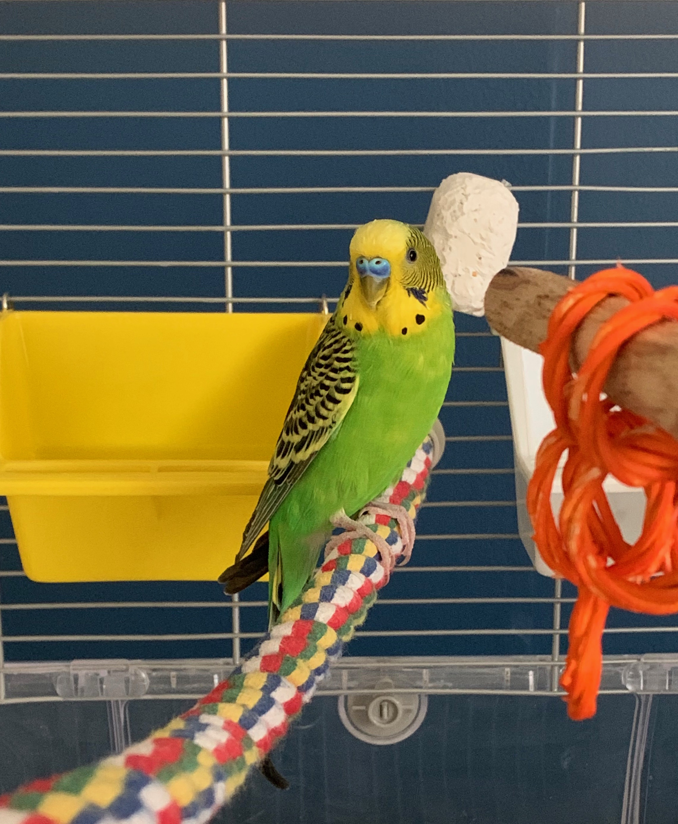 Specialized Care for Avian & Exotic Pets - Veterinarian in Clarence